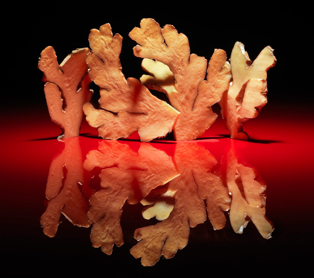 fresh organic ginger sculpture on a red background