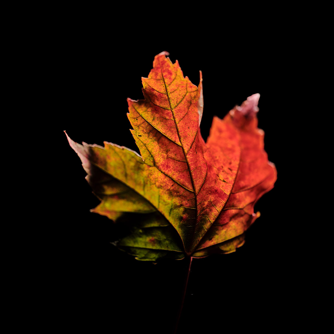 LEAVES-TEST-311-2