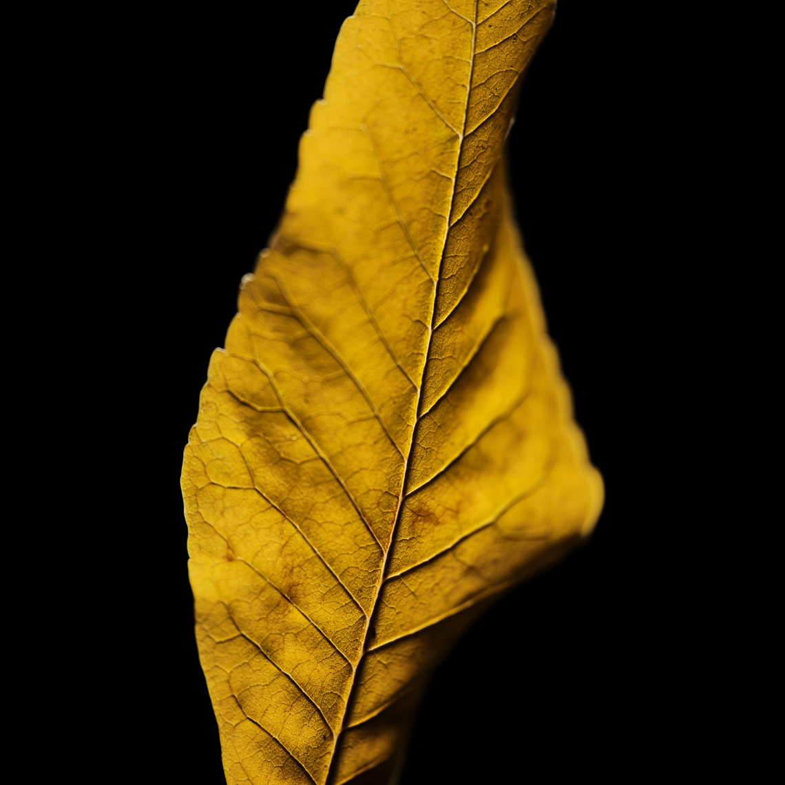 LEAVES-TEST-377_1