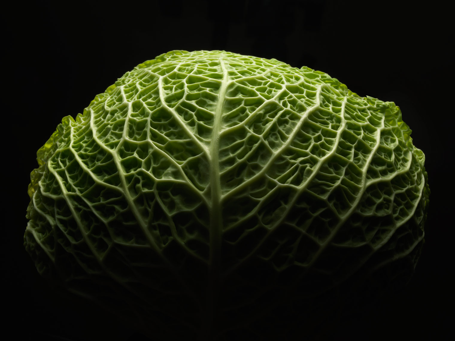 head of green cabbage that looks like a brain with dramatic lighting