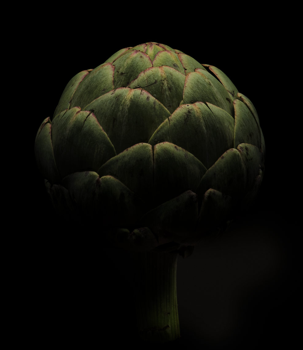 moody artichoke on a black background dramatic
