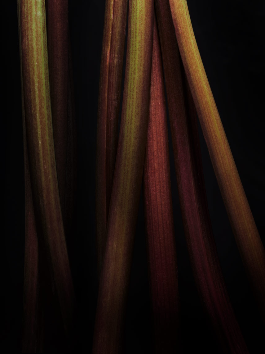 moody photo of rhubarb stalks on black